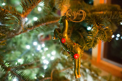 live christmas tree decorated for holidays (DigiDreamGrafix.com) Tags: christmas decorations newyear christmaseve festive greeting happy holiday xmas merry christmastime firtree toys presents bauble santa owl fun tradition green