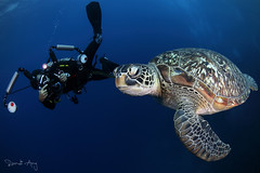 L O O K (Randi Ang) Tags: gili meno gilimeno lombok indonesia giliislands island islands turtle green sea greenseaturtle seaturtle randi ang canon eos 6d fisheye 15mm underwater scuba diving dive photography underwaterphotography wide angle randiang wideangle