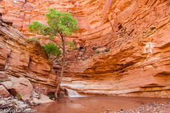 A Tree by the Falls (Ralph Earlandson) Tags: coloradoplateau cottonwood utah capitolreef tree waterfall desert