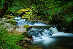 Woodland falls (Through_Urizen) Tags: category cornwall england golithafalls longexposure places waterfall water river riverfowey uk unitedkingdom greatbritain forest woodland woods trees tree moss lichen whitewater stream creek silkwater canon70d canon1585mm canon landscapephotography travelphotography cascade