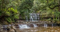 Liffey Falls, Tasmania (David Hamments) Tags: liffeyfalls roadtrip panorama tasmania austraila waterfall fantasticnature