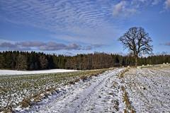 Der Weg zur Eiche (Helmut Reichelt) Tags: weg eiche felder schnee wolken sonnenschein schwaigwall geretsried bayern bavaria deutschland germany winter januar leica leicam typ240 captureone12 dxophotolab leicasummilux50mmf14asph