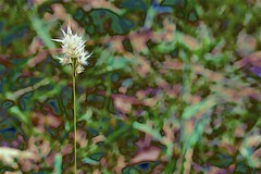 Ozzie Grass Abstract (maginoz1) Tags: flowers flora abstract foliage orchid grass shrub contemporary art manipulate curves summer january 2019 bulla melbourne victoria australia canon g3x