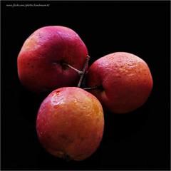 Crabby apples (kimbenson45) Tags: apples crabapples fruit stillife colourful colorful red orange blackbackground closeup