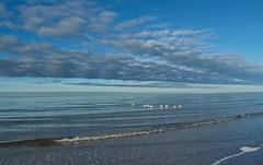 Weststrand Prerow (Wunderlich, Olga) Tags: strand sand mecklenburgvorpommern wellen blau möwen himmel wolken landschaftsaufnahme naturfoto ostsee