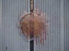 kiel_P9291482 (ghoermann) Tags: deu düsternbrook geo:lat=5433927032 geo:lon=1015703466 geotagged germany kiel schleswigholstein jellyfish