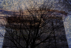 tree (Jacek Krasodomski) Tags: drzewa composition landscape tree jacekkrasodomski