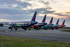 The five Belgian icons of Brussels Airlines (Jonas_Evrard) Tags: aviation airport aircraft airplane airliner spotting spotter specialpaint photography planespotting plane planes planespotter brussel brusselsairlines icons photoshoot
