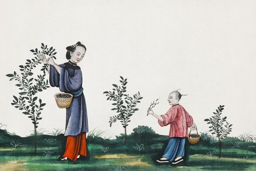 Chinese painting illustrating a mother and a son plucking tea sprouts (ca.1800–1899) from the Miriam and Ira D. Wallach Division of Art, Prints and Photographs: Art & Architecture Collection. Original from the New York Public Library. Digitally enhanced b