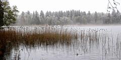 2/2  Brume sur le lac Bad-Bayersoien - Bavière (Nathery Reflets) Tags: lac eau brouillard see badbayersoien bavière allemagne arbre forêt neige brume bois