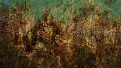 Bildschichten Am Fluss 20 Wieltsee (wos---art) Tags: bildschichten fluss river wasser water unterwasser underwater gestrüpp bäume baum verbrand ausgehöhlt rus äste ufer