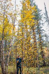 4268 Golden Shower (paule48) Tags: action canada kristilake sk saskatchewan trees autumn birch fall fallcolors falling forest landscape leaves shower yellow golden dale people