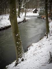 Elswout 2019: Icy waterway (mdiepraam) Tags: elswout 2019 haarlem trees snow cabin brook ice