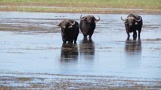 Namibia Dangerous Game Safari - Caprivi Strip 121