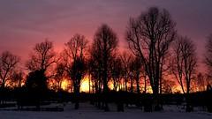 Light of Dawn (halleluja2014) Tags: cordata tilia lind linden new cold frost ice pinksky wonder winter sweden dalarna falun norslund sunrise morgon morning gryning dawn