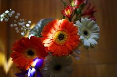 Ray of light (Baubec Izzet) Tags: baubecizzet pentax bokeh flowers bouquet flickrunitedaward