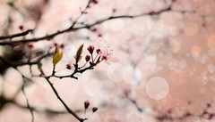 Fantastic tree ... (Julie Greg) Tags: tree texture flower flowers colours canon blossom