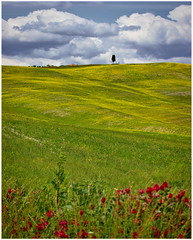 the colors of Tuscany (kurtwolf303) Tags: tuscany toscana italy italien landscape canoneos600d kurtwolf303 landschaft tree baum feld field sky clouds himmel wolken natur nature travelphotography reisefotografie