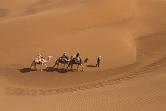 Caravane (FrancoisKaa) Tags: maroc désert sable dromadaire