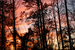 Silhouette Of The Woods. (dccradio) Tags: lumberton nc northcarolina robesoncounty outdoor outdoors outside nature natural march spring springtime sunday sundayevening sundaynight evening silhouette tree trees treebranch branch branches treebranches treelimb treelimbs sky colorful colorfulsky sunset sunsetsky clouds pinkclouds bluesky nikon d40 dslr scenic woods wooded forest beauty beautiful pretty landscape