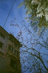 19 (Ilya Feldman) Tags: mju2 mju kodak ultramax 400 mjuii olympus film russia 35mm sochi