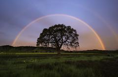 Double Rainbow Sunrise (Omnitrigger) Tags: rainbow arch tree oak sunrise california loneoak lucky nature potofgold