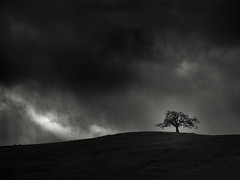 Tree and Light (StefanB) Tags: usa 2018 45200mm california cloud em5 geotag outdoor storm tree treescape winter sanjose