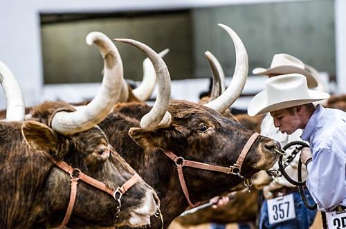Stock show Longhorns 2009061.JPG
