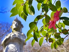 仏像と花 (hamapenguin) Tags: apple iphone nature flower winter buddhism statue kanagawa kamakura 鎌倉 建長寺 仏像