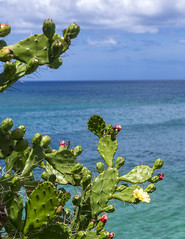 Maconde View Point / Обзорная площадка Маконде (dmilokt) Tags: природа nature пейзаж landscape лес небо облако пальма дерево forest sky cloud palm tree море океан sea ocean скала камень rock dmilokt green зеленый