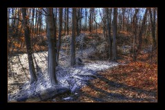 Lost Tire (* Gemini-6 * (on&off)) Tags: autumn frost water trees landscape shadows hdr framed diagonal tire hss