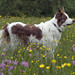 Waiting for spring .... (A child in the night) Tags: imperial thedelines spring luke waiting sheepdog bordercollie england dog
