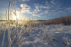 Sunny (RdeUppsala) Tags: frost rimfrost hoarfrost escarcha invierno ice is winter vinter sverige suecia sweden sky cielo clouds nubes moln uppland uppsala snow snö sol sun ricardofeinstein
