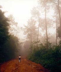 The magic forest (10 Rolls Of Film) Tags: portugal sintra forest fog magic fairy tale film medium format 120 bronica etrc zenzanon 50mm 5028 f28 pe zenzanonpe 645 6x45 holidays scan kodak ektar 100 c41 throwback