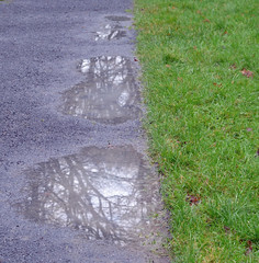 good to reflect (conall..) Tags: reflection puddle puddles tree sky winter bare branches nikon afs nikkor f18g lens 50mm prime primelens nikonafsnikkorf18g rowallane national trust saintfield walled garden northernireland path grass rain wetweather