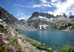Iceberg Lake Wildflowers - Sierra (Bruce Lemons) Tags: sierra sierranevada mountains backpacking hike hiking wilderness landscape california anseladamswilderness minarets ritterrange lake lakes iceberglake mark