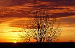 Winter Sunrise (SkyeHar) Tags: sun sunrise sunlight winter clouds orange dawn sky tree sonya6300 seasons weather hiver invierno sonne sonnenaufgang amanecer dämmerung himmel cielo nubes wolken