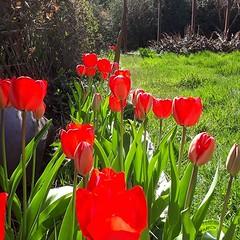 #Spring has sprung on the Sunshine Coast! (Doug Murray (borderfilms)) Tags: spring has sprung sunshine coast