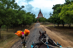 Transportation to Bagan Temples (shapeshift) Tags: dhammayazika architecture asia bagan brick burma davidpham davidphamsf horsecarriage landscape mandalay myanmar oldbagan pagan pagodas ruins shapeshift southeastasia temple templescape transport transportation travel