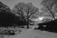 2019 2-1-4b(bw) Glendalough winters tree (MJMPHOTOS.IE) Tags: tamron1530 2019 glendalough countywicklow treees snow lakes winter sonya7iii hills mountains martinjmurphyphotography