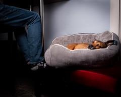 (05/52) Companion (Zach & Artsy) Tags: 52weeksfordogs artsy pugratterrier
