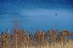DSC04738 (bluesevenxp) Tags: geiseltalsee mücheln marina lake see ufer floating