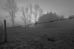 DSC01949 (MikeSolfrank) Tags: none herbst autumn nebel mist light lichtstimmung tree bäume berg wood forest bayern bavaria outside nature art sky winter