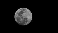 Moon (99.7% illumination) February 18, 2019 (Pablo L Ruiz) Tags: moon supermoon full night sky astrophotography