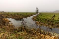 Misty morning landscape (Through Bri`s Lens) Tags: sussex tree bramber beeding stream farm brian brianspicer canon5dmk3 canon1635f4