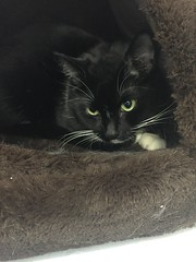 Chilli - 4 year old neutered male
