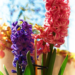 Pincel de flores thumbnail