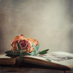 Orange rose (Ro Cafe) Tags: nikkor105mmf28 sonya7iii stilllife rose flower oldbook textured