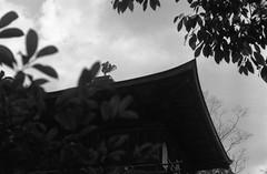 February 19, 2019_kyoto_30 (Satoshi Kondo) Tags: bw bnw blackandwhite blackandwhitephotography blackandwhitephoto bnwphoto bwphoto bnwphotography bwphotography blackandwhitepoto blackandwhitepotography monochrome filmphotography filmcamera filmphoto film filmpoto leica leicaphoto leicaworld leicam3 street streetphoto streetsnap streetphotography summicron summicron50mm kyoto japan 京都 白黒 フィルム フィルム写真 フィルムカメラ ライカ ライカm3 ズミクロン kodak