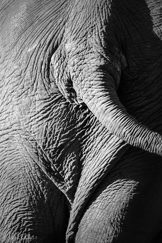 Elephant skin / Elefantenhaut